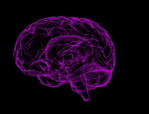 Cerebro adolescente ¿cómo funciona? David Bueno